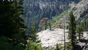 Three trees stand alone on the side of an Emerald Bay cliff.