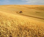 Wheat prices up more than $1 since January