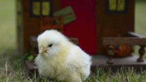 Now trending: Restaurants will continue to make 'cage-free egg' pledges in 2016