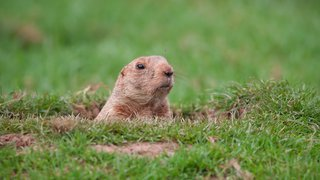 Is the 'Groundhog Day effect' finally over for menu labeling?