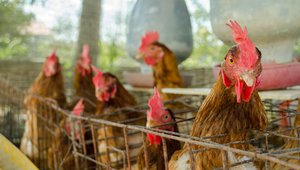World's largest food service provider goes totally cage-free