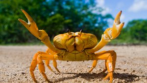 White Castle claws its way into McDonald's crab space