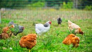 How embracing humane animal practices enhances profits