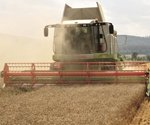 Wheat prices drop more than 20 cents in a week