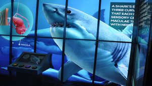 BrightSign, DigiComm create digital shark experience