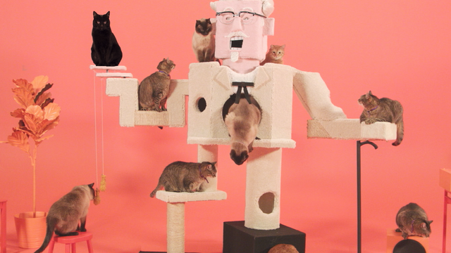 KFC taps cats to hawk chicken today