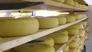 Cheese prices plummet after weeks on the rise