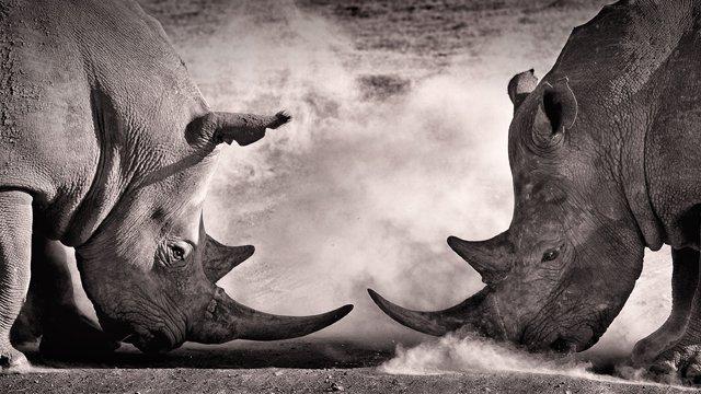 The wild world of ICOs