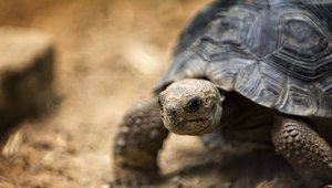 HVAC controls keep Galapagos tortoise eggs at just the right temperature