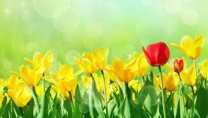 Lawn and Garden Maintenance Tips for Spring