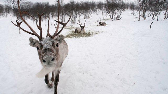 Curse you, unruly reindeer! Domino's reins in reindeer delivery plan