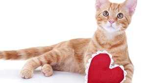 A romantic pizza from Giordano's is available even for single cat lovers on Valentine's Day