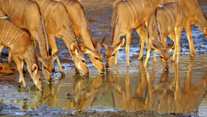 Why every retailer needs to be a watering hole organization