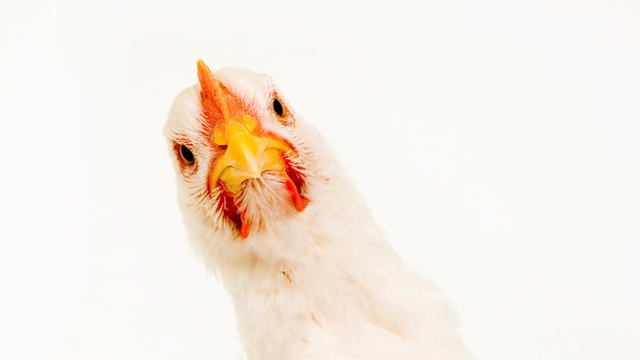 Wendy's to chickens: 'Let's get small'