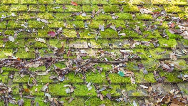 The Benefits of Algae Resistant Shingles