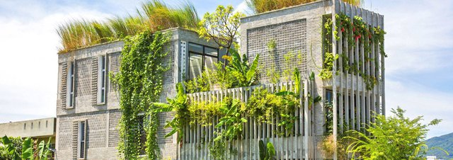 Green office covered with native plants rescued on-site