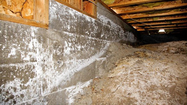 5 tips for fighting mold, humidity