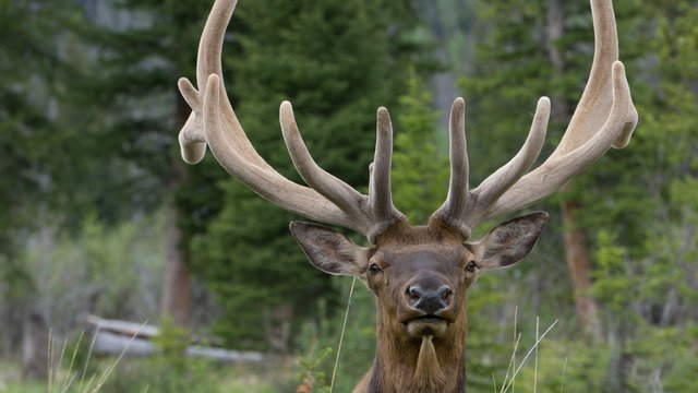 Arby's 'gone wild(er)' with venison nationwide, elk in 3 locations