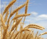 Wheat prices drop a dime in a week