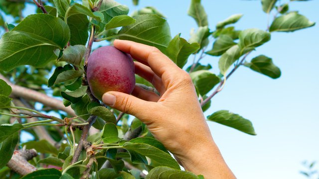 The 'low-hanging (financial) fruit' right outside your QSR window