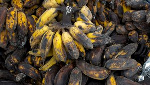 Calcuatling the new cost of food spoilage