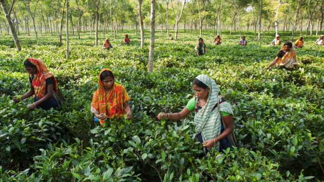 Changing the world one tea leaf at a time: Teatulia CEO talks transparency